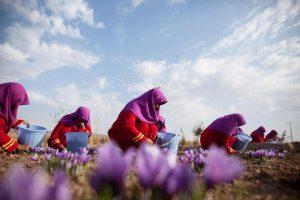 Afghan-saffron