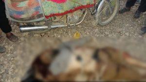 prominent Taliban commanders killed_censored