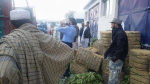 pakistani-driver-arrested-in-nangarhar